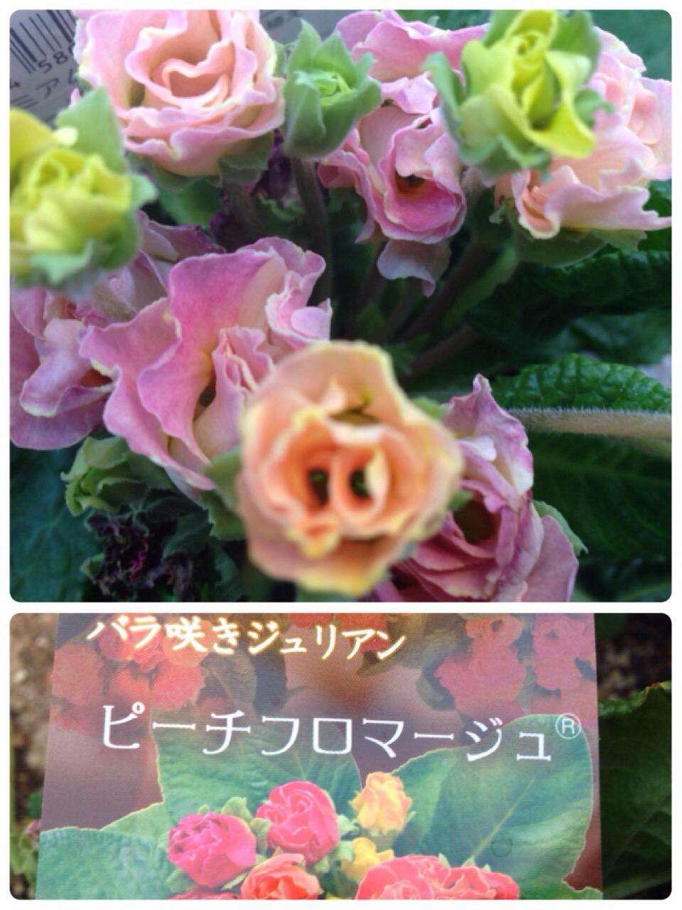 IMG_5943.JPG